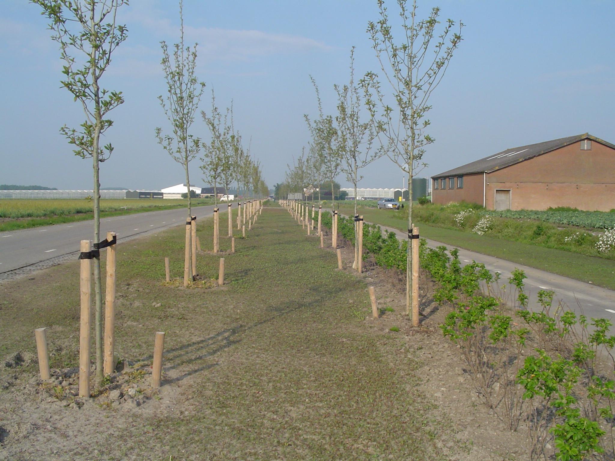 Afbeeldingsresultaat voor bomen planten